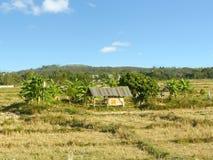 As árvores simples da casa de campo e de banana no arroz colocam Fotografia de Stock