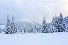 As árvores sob a neve estão no gramado Fotos de Stock Royalty Free