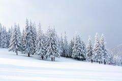 As árvores sob a neve estão no gramado Fotografia de Stock Royalty Free