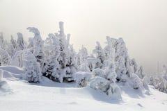 As árvores sob a neve estão no gramado Imagens de Stock Royalty Free