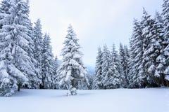 As árvores sob a neve estão no gramado Fotografia de Stock