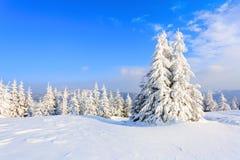 As árvores sob a neve estão no gramado Fotos de Stock