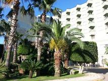 As árvores tropicais fora do hotel Imagem de Stock Royalty Free
