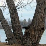 As árvores velhas fazem grandes alimentadores do pássaro Foto de Stock