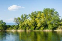 As árvores verdes bonitas no rio suportam refletir na água Fotos de Stock Royalty Free