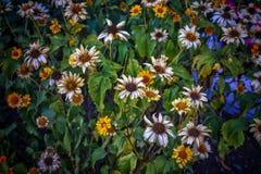 As últimas flores do verão fotos de stock 5680e36f1