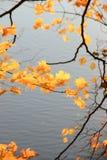 As últimas folhas douradas sobre o rio foto de stock