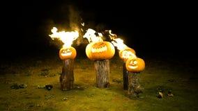 As abóboras de queimadura do Dia das Bruxas na árvore entram a escuridão, campo, névoa, crepúsculo A abóbora alaranjada grande ir filme