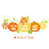 As abóboras decorativas de Dia das Bruxas e o vetor vermelho do gato projetam objetos Fotos de Stock Royalty Free