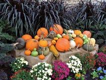 As abóboras empilham com flores Imagem de Stock Royalty Free