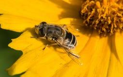 As abelhas imagem de stock
