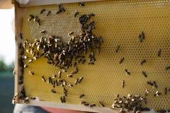 As abelhas dentro de uma colmeia no campo fotos de stock royalty free