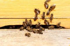 As abelhas do mel estão voando a uma entrada da colmeia da abelha fotografia de stock royalty free