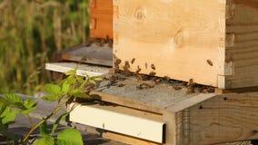 As abelhas entram e as colmeia da saída fecham-se acima video estoque