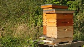 As abelhas entram e retiram em colmeia em uma exploração agrícola filme