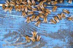 As abelhas entram na colmeia imagem de stock royalty free