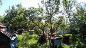 As abelhas estão voando em caixas de madeira da colmeia azul no jardim no vilage ucraniano video estoque