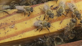 As abelhas na colmeia vídeos de arquivo