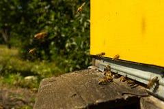 As abelhas voam à colmeia e levam o pólen em sucessão em dias de verão foto de stock royalty free