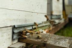 As abelhas voam à colmeia e levam o pólen em sucessão em dias de verão fotografia de stock royalty free