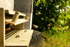 As abelhas voam à colmeia e levam o pólen em sucessão na soma imagem de stock