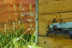 As abelhas voam para dentro na colmeia hive apiary imagem de stock
