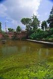 As algas verdes cobriram a lagoa imagem de stock royalty free