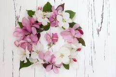 As alianças de casamento com a árvore de maçã da mola florescem no fundo de madeira velho branco fotos de stock