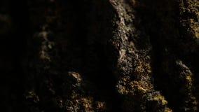 As alianças de casamento do ouro no close up macro da árvore disparam na joia do diamon filme