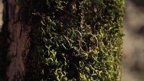 As alianças de casamento douradas estão no fundo do musgo verde grosso filme