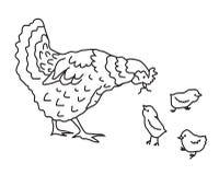 As alimentações de galinha seus bebês Ilustração do vetor ilustração do vetor