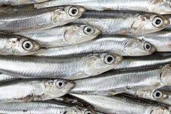 As anchovas frescas prepararam a textura do fundo do marisco Alimento cru Foto de Stock Royalty Free