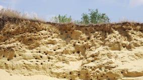 As andorinhas aninham-se na montanha da areia video estoque