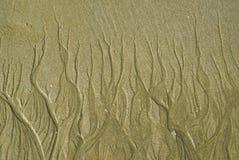 As areias texture como a árvore Imagem de Stock Royalty Free