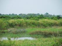 As armadilhas dos peixes em um campo de grama verde perto da lagoa no tempo chuvoso temperam no campo do si Thammarat Province de imagem de stock