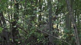 As armas militares estão nas madeiras O soldado está movendo-se no homem armado floresta video estoque