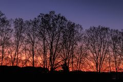 As army soldiers, the trees are lined up watching the sunset royalty free stock photos