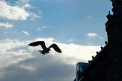 As asas estão largamente abertas imagens de stock royalty free