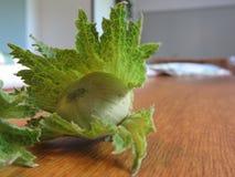 As avelã verdes frescas em uma mão de madeira da tabela apenas escolheram da árvore Imagens de Stock Royalty Free