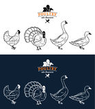 As aves domésticas cortam diagramas Foto de Stock Royalty Free
