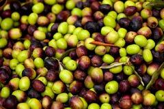 As azeitonas pretas e verdes frescas venderam em um mercado foto de stock