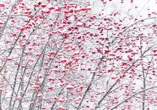 As bagas da cinza de montanha em um inverno estacionam Fotografia de Stock Royalty Free