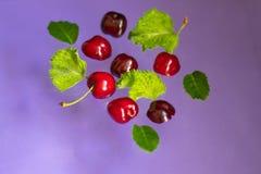 As bagas de cerejas vermelhas com e sem as caudas, as folhas verdes pairam acima da superfície fotos de stock