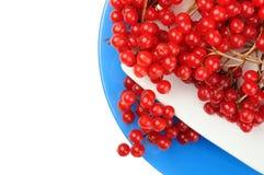 As bagas maduras suculentas vermelhas do viburnum encontram-se em uns pires brancos na placa redonda azul Fotografia de Stock