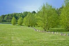 As bandeiras americanas alinham o parque no Memorial Day Imagens de Stock Royalty Free