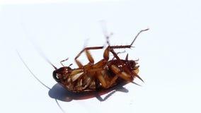 As baratas são morrem após ter comido inseticidas vídeos de arquivo