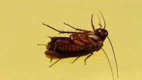 As baratas são morrem após ter comido inseticidas filme