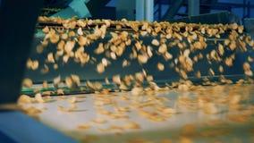 As batatas fritas de batata estão caindo do transporte industrial vídeos de arquivo