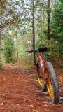 As bicicletas são veículos usados para chapinhar nas madeiras fotos de stock