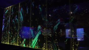 As bolhas da água nos cilindros de vidro aumentam à parte superior vídeos de arquivo